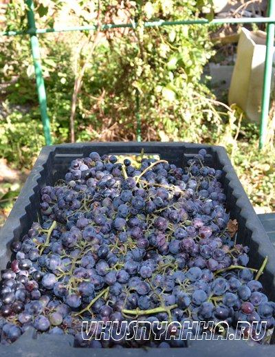 Рецепт домашнего вина из винограда, приготовление, шаг 1